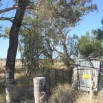 fenced sheep dip